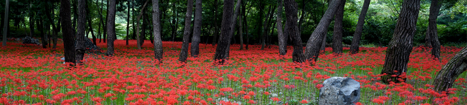 MT. SEONGJUSAN RECREATION FOREST [photo]