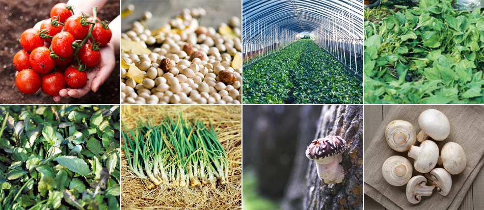 Agricultural Product [photo]